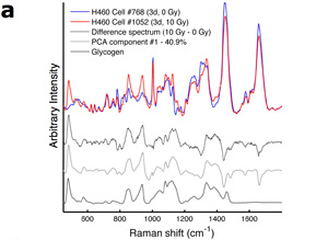 Representative Raman spectra of irradiated and unirradiated H460 cancer cells
