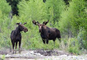 North American Model of Wildlife Conservation gets a cultural refresh